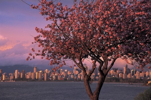 Vancouver 2 - Crédit photo Tourism BC, Tom Ryan