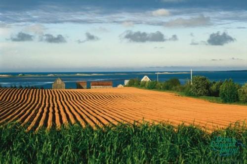 Champs pommes de terre - Credit Photo Tourism PEI - Jack LeClair