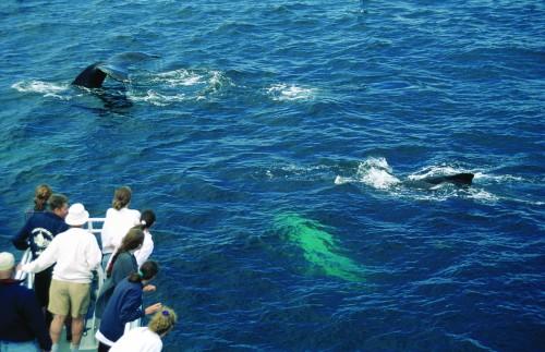 Observation des Baleines - Crédit photo Ministère du Tourisme du Québec