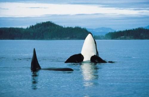 Orque - Credit Photo Tourism British Columbia