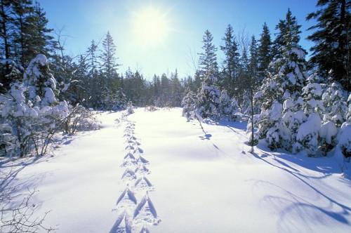 Parc Algonquin - Credéit Photo Ontario Tourism