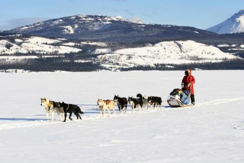 Chiens de traineaux - Crédit photo Government of Yukon